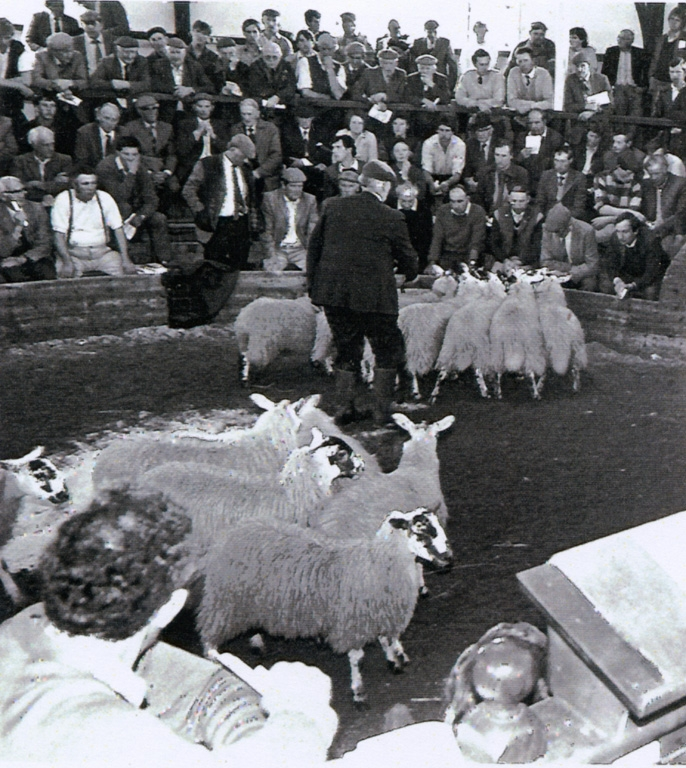Auction Mart Sheep Being Auctioned 1985