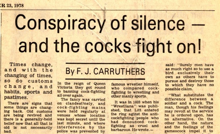 Cockfighting Article 1978