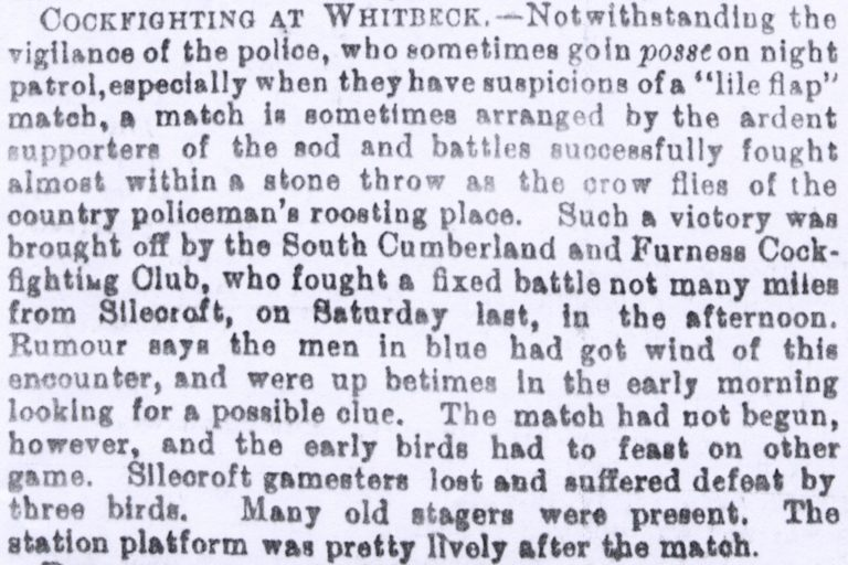 Cockfighting At Whitbeck Article