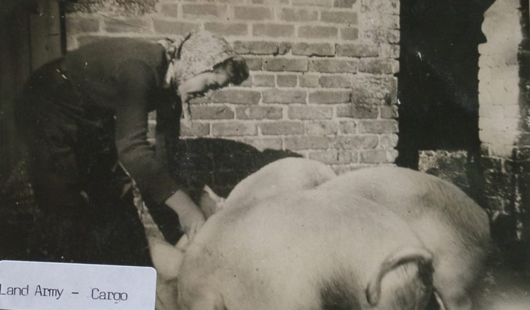 Land Army W Pig
