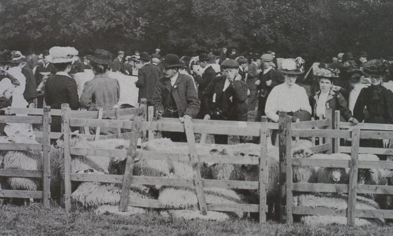 Sheep Penned In At Agricultural Show 1908