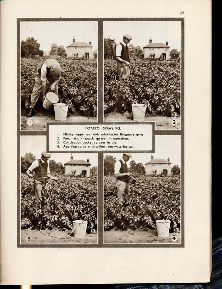 The Vegetable Garden Displayed RHS 1942 Page 40