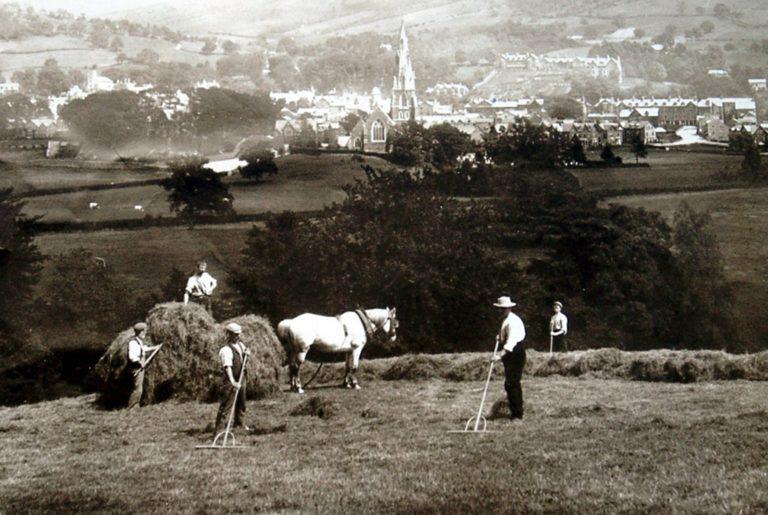 Horse Hay Sled