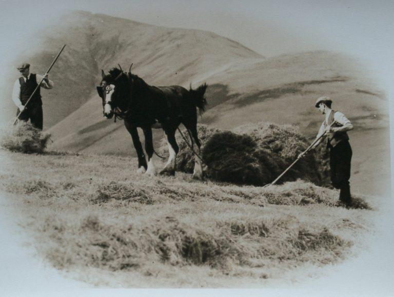 Horse Sled Hay